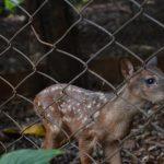 bosque_filhotes_0206_(2)