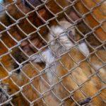 bosque_filhotes_bugio_01062016carlosnatal8176